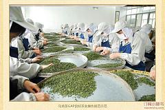 白银路站 北苑峰茗茶