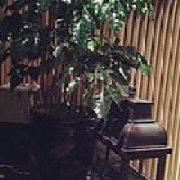 幻想咖啡西餐厅
