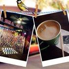 SPRcoffee 大崂路店