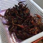 龙王虾小龙虾 黑石礁尖山街店