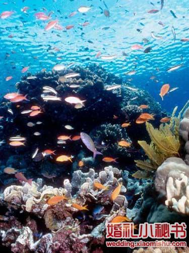 壁纸 海底 海底世界 海洋馆 水族馆 375_500 竖版 竖屏 手机