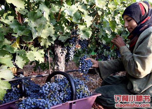 黎巴嫩葡萄酒:新世界的新宠儿