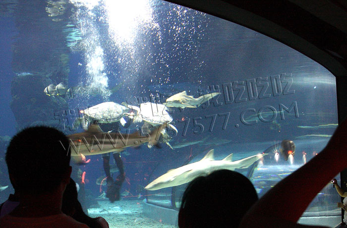 长风海洋世界鲨鱼隧道晚宴