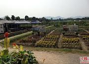 西溪太美农场