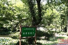 上海植物园 绿野打鱼打钱