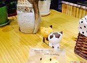 迷途猫的奶酪店 集盒店