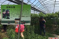 阿林果蔬园
