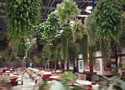 花鸟园生态餐厅