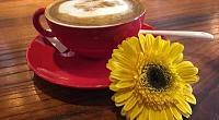 Viagem Cafe 图片