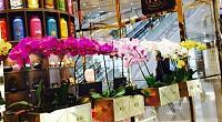 TWG Tea 国金中心商场店 图片