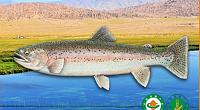 人鱼部落有机高原大闸蟹 图片