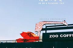 zoo coffee 金山石化店