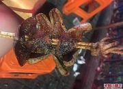 倪氏龙虾海鲜烧烤